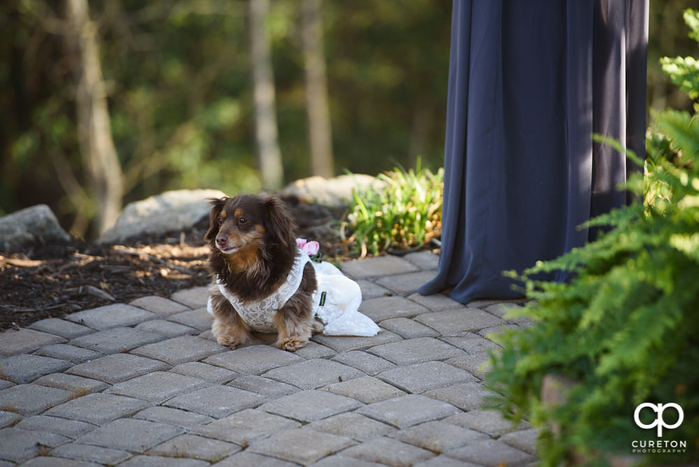 Elegant backyard wedding in the springtime in Greenville,SC.