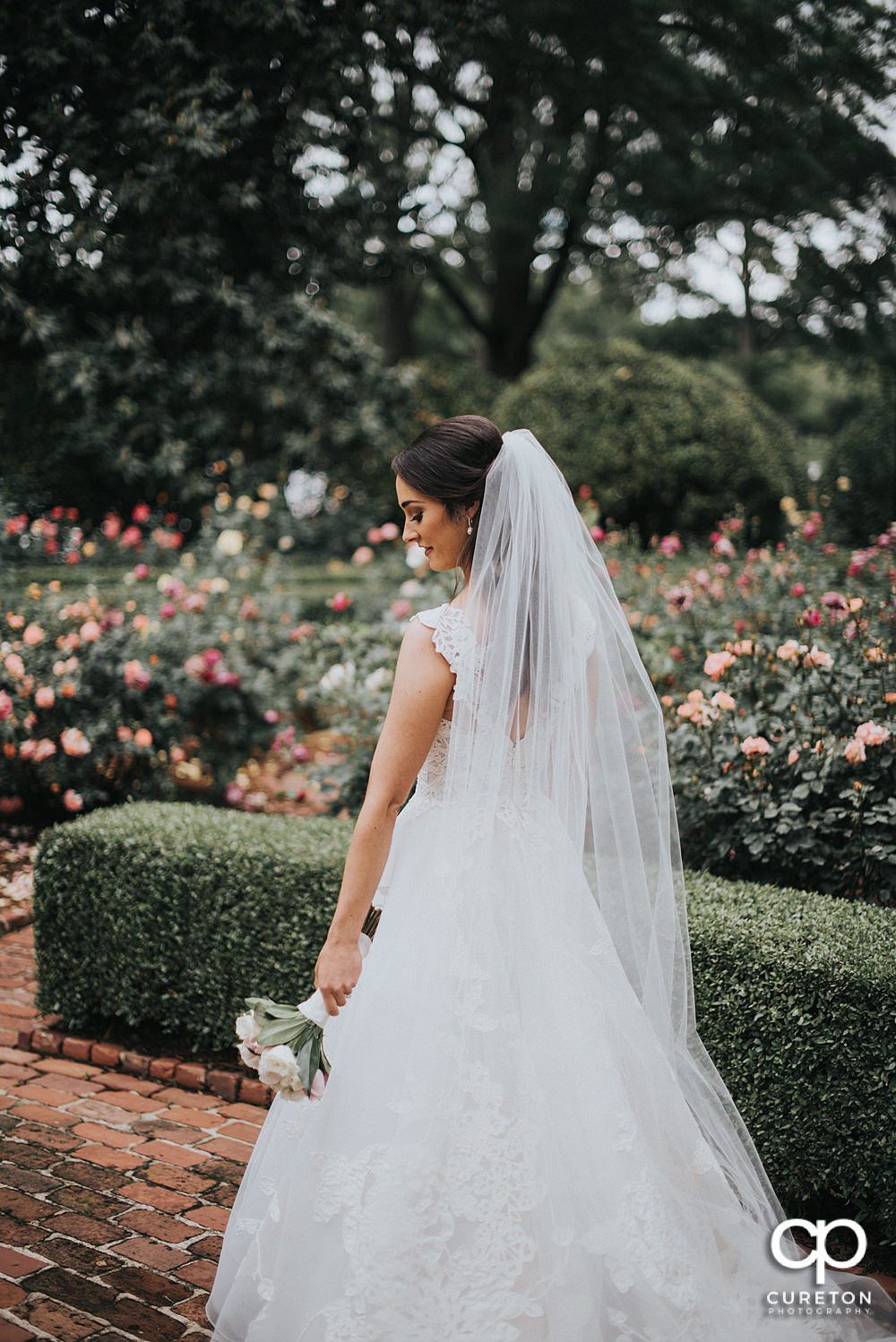 Bride looking at her flowers with a backdrop of roses.