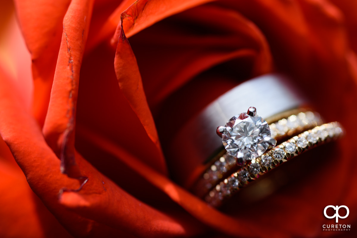 Closeup of the wedding rings in a rose.