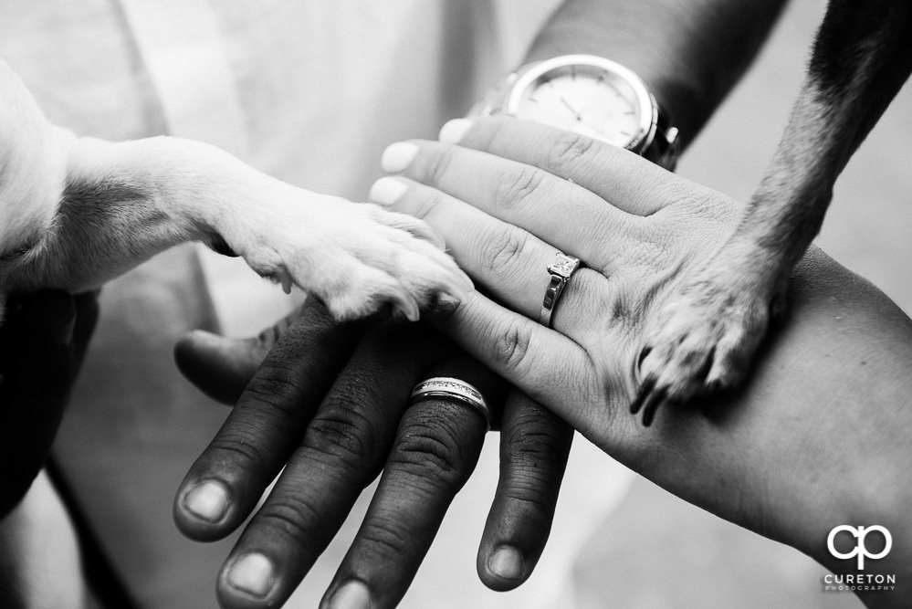 Bride and groom's hands with their dogs paws during an engagement session in downtown Greenville,SC.