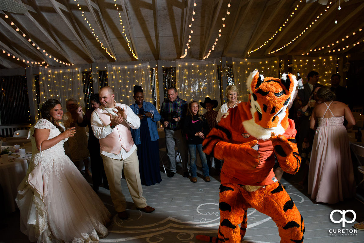 Clemson Tiger making an appearance at the wedding reception.