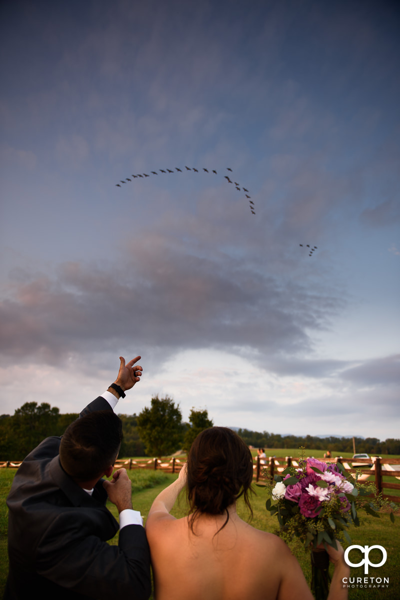 Bride and groom looking at birds overhead in the field.