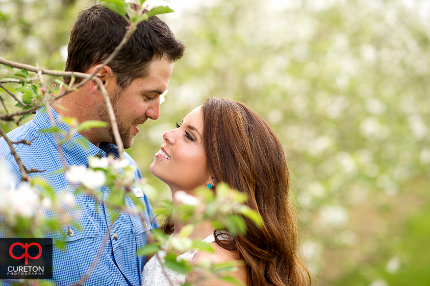 A couple staring at each other under an apple tree during their recent engagement session at an apple orchard in Hendersonville,NC.