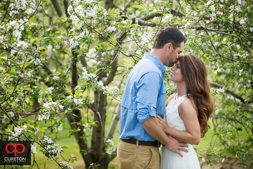 A groom to be kissing his fiancee during their recent engagement session at an apple orchard in Hendersonville,NC.