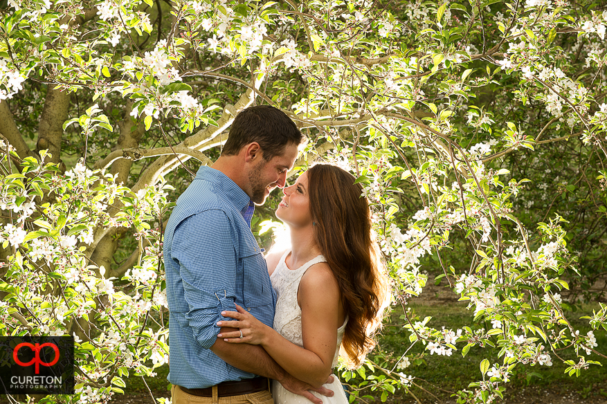Couple gazing at each other under an apple tree in Hendersonville, NC during an engagement session.