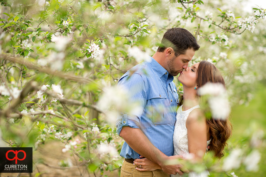 Couple kissing through the apple trees during their recent engagement session at an apple orchard in Hendersonville,NC.