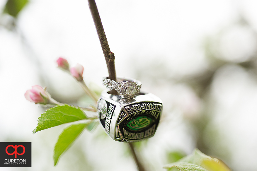 Rings on the branch of an apple tree.