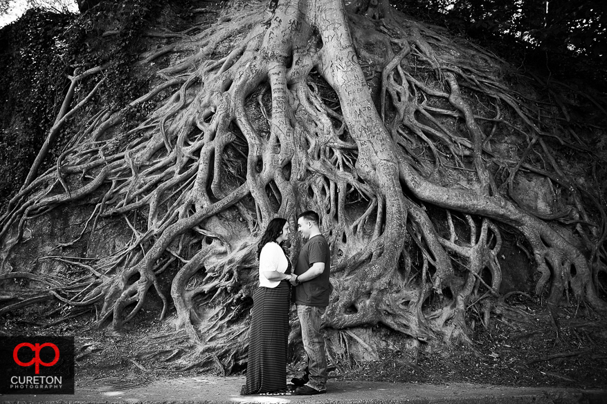 Engaged couple standing in front of the tree roots at Falls Park in Greenville,SC.