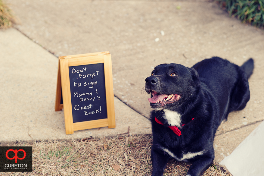 Dog with a bridal sign
