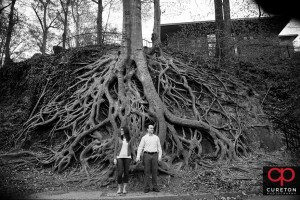 Engagement photo in front of the roots tree in Falls Park.