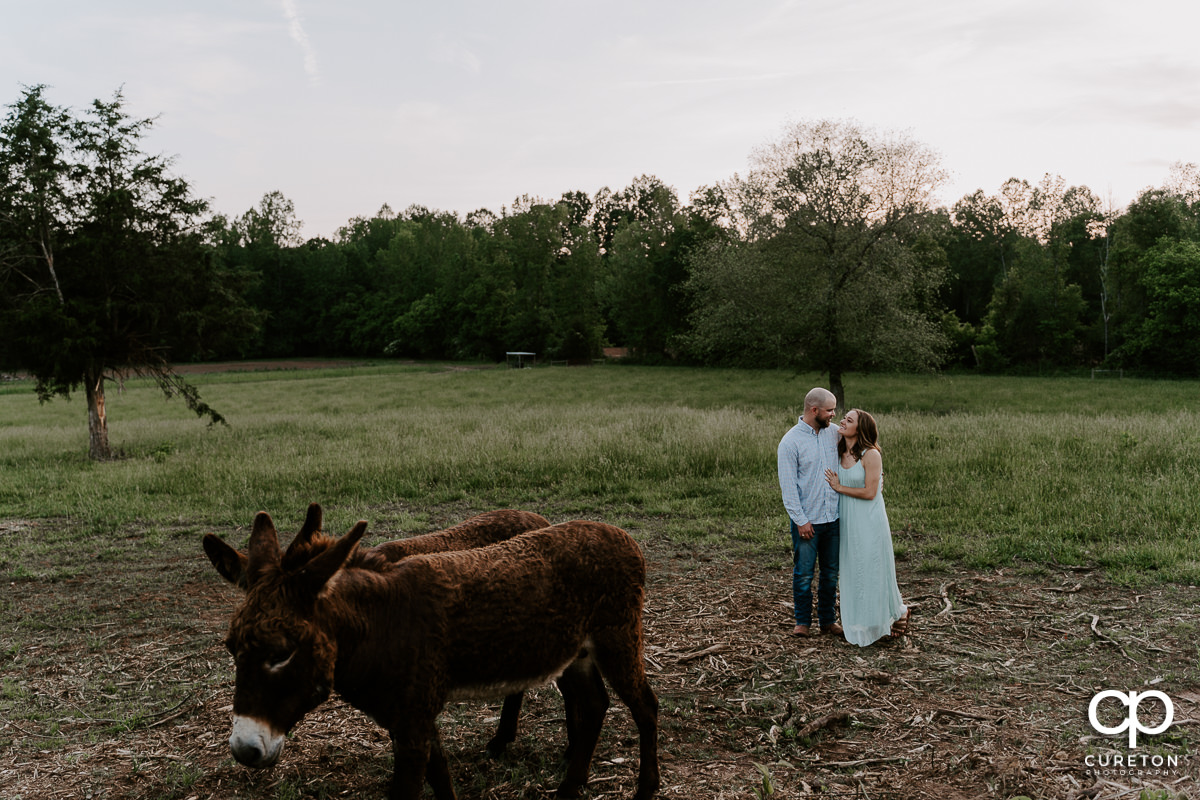 Man and woman and their donkeys during a family farm engagement session in Gray Court,SC.