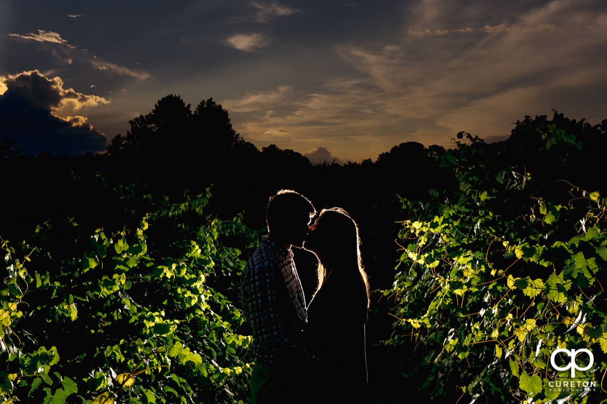 Engaged couple kissing at sunset in a vineyard.