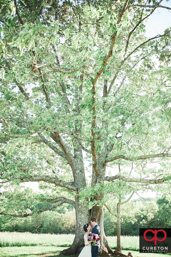 Bride and groom at the oak tree at Greenbrier farms inEasley,SC.