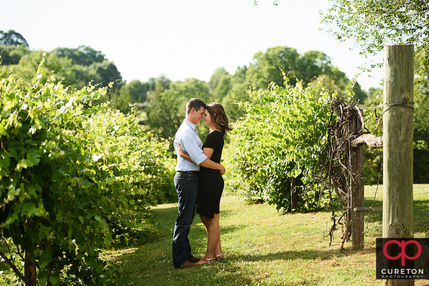Engaged couple standing forehead to forehead between rows of grapevines at Greenbrier Farms.
