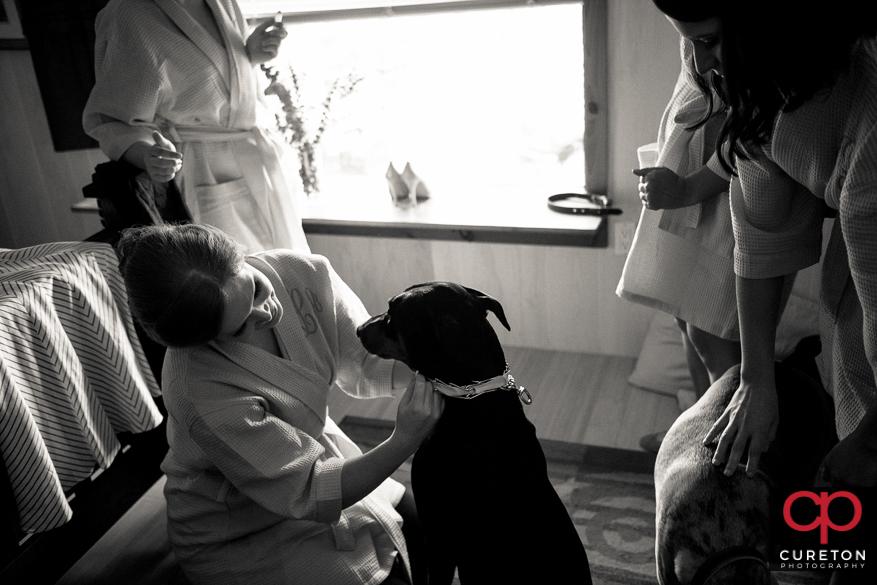 Bridesmaids collaring up the dog.