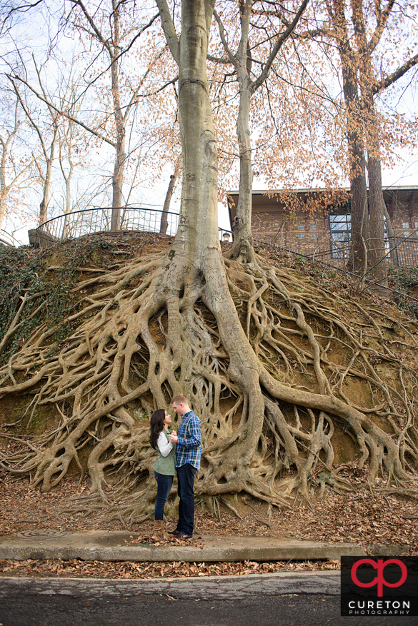 Teh infamous roots tree in falls park in downtown Greenville,SC.